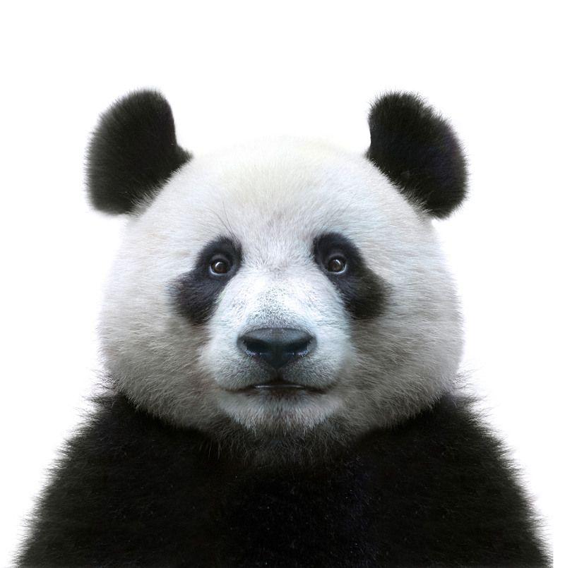 Massage Panda